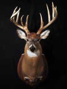Real Deer Head Wall Mount Gallery For Gt Deer Head Front