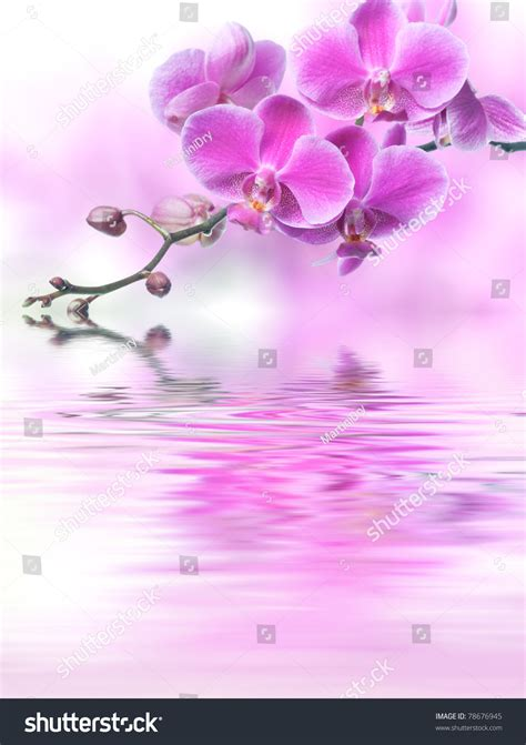 orchid blue water reflection flowers beautiful orchid beautiful purple orchid flowers reflected in the water