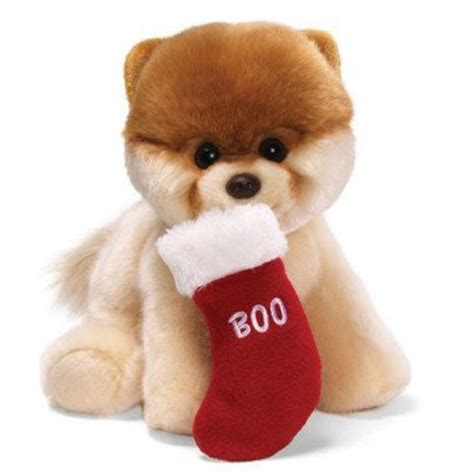boo the dog christmas boo it s cuddling time petslady