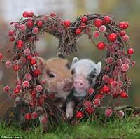 These Piglets Get Up Close And Personal As Valentines Day Approaches