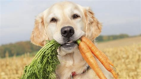 can dogs can dogs eat carrots reference