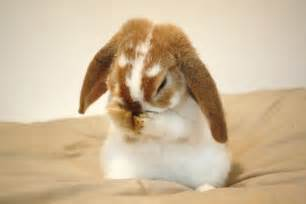Cute bunny pictures bunny pictures adorable bunny pictures cute
