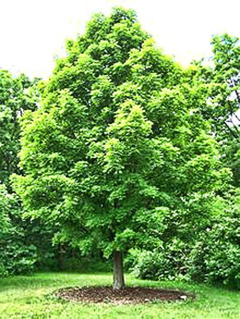 tree water sugar crosswater gardens cemetery louisville s premier burial