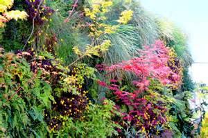 Plants For Vertical Gardens Plants On Walls Shade Vertical Garden