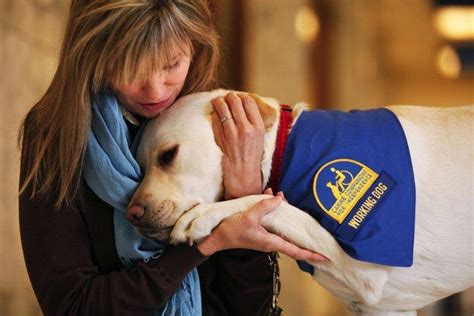 what do service dogs do what do you fluffy isn t a service disability colorado