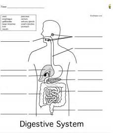 digestive system worksheet the digestive system
