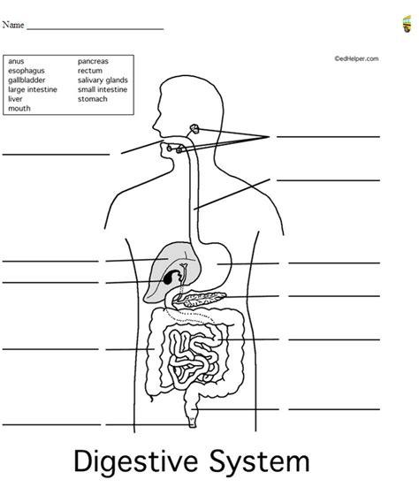 Digestive System Diagram Worksheet digestive system worksheet the digestive system
