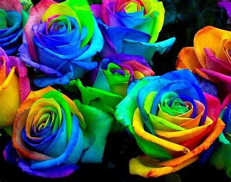rainbow colored roses how to grow a rainbow colored bit rebels