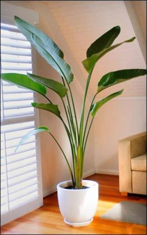Home Plants by 25 Best Ideas About Indoor Plant Decor On Pinterest