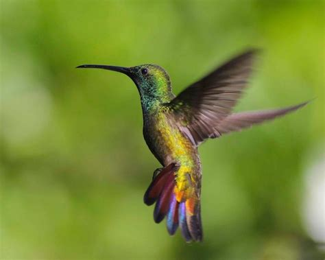 trinidad the land of the hummingbirds epicure culture