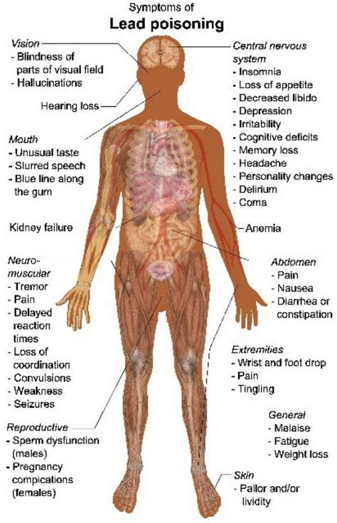 poison symptoms lead poisoning symptoms www pixshark images galleries with a bite