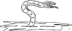 cottonmouth snake coloring page cottonmouth snake coloring pages coloring coloring pages