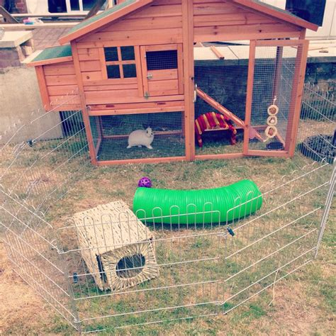 Rabbit Hutch Set Up rabbit hutch set up stuff for my babies