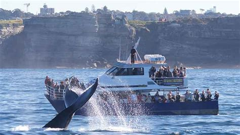 boat cruise wellington harbour whale watching and sydney harbour cruise departs darling