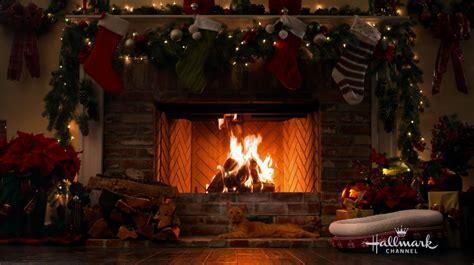 happy  cat  holiday yule log video hallmark channel