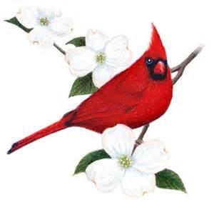 virginia state bird and flower cardinal cardinalis