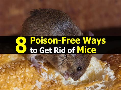 get rid of mice in garden