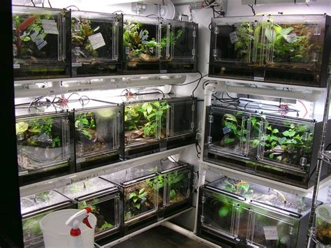 frog room frog room search reptile frogs reptiles and vivarium
