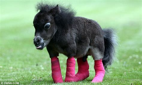 Miniatur Kuda Poni By Nicebags miniature pony owner launches desperate appeal to raise 163