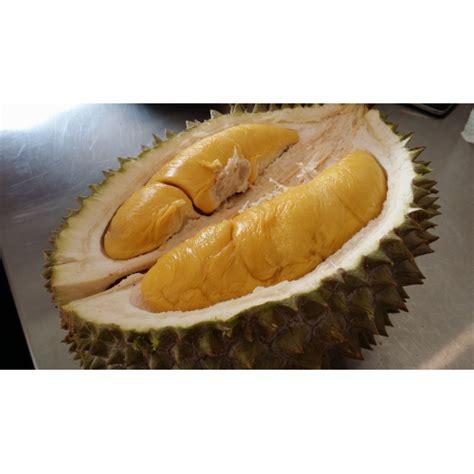 Bibit Durian Musang King jual bibit durian musang king 40 cm hp 0856 0856 6034