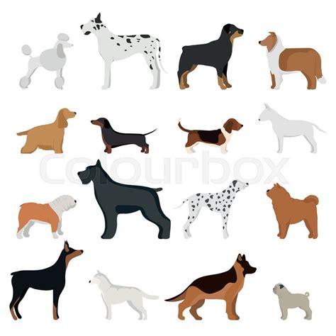 dog breed vector illustration dog breed isolated  white