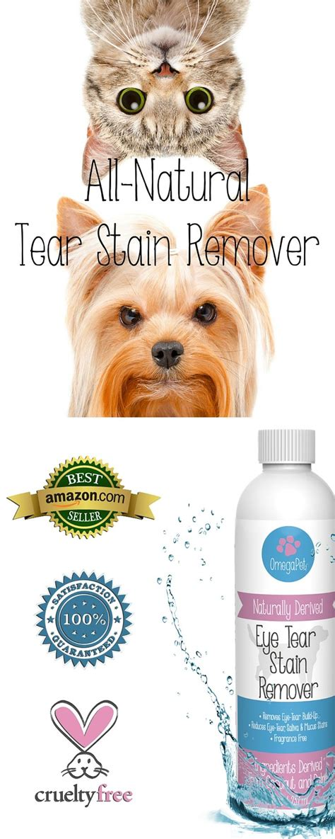 yorkie tear stains 1000 ideas about havanese grooming on havanese puppies havanese puppies