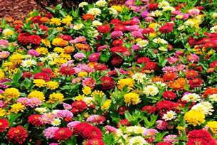 Types Of Garden Flowers 25 Types Of Flowers To Plant For Summer Summer Flowers