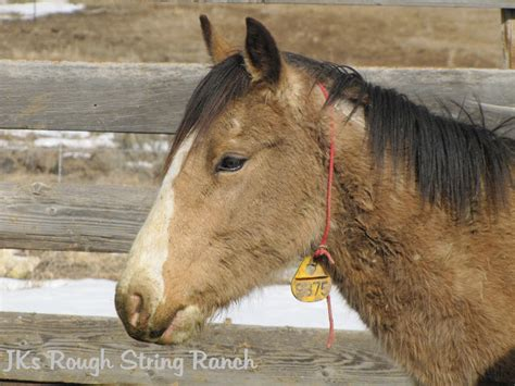 blm mustang adoption requirements at the string horses