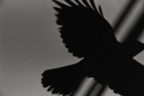 libro ravens quot ravens quot un grande libro fotografico il post