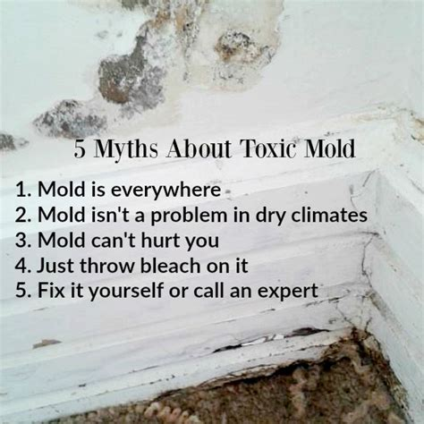 Black Mold Detox by 5 Myths About Toxic Mold It Takes Time