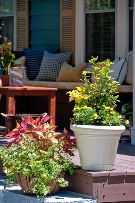 curb appeal plants 10 curb appeal tips from the pros hgtv