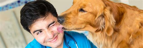 clavamox for dogs side effects clavamox for dogs side effects