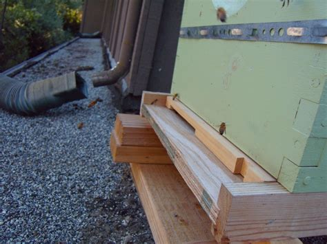 top bar hive entrance hole size illustrated glossary of beekeeping overall gardener