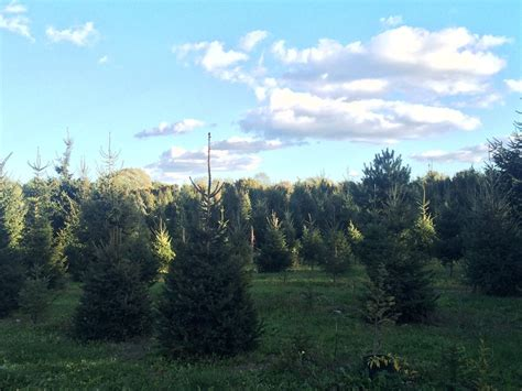 the christmas tree farm at elwood on 10 17 just to see