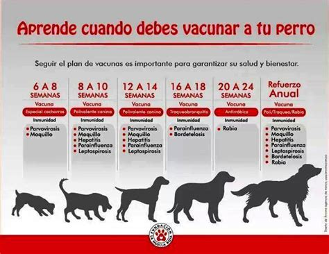 Calendario De Cachorro Vacunacion Cachorros Imagui