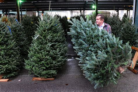 fir real christmas trees in crisis as americans flock to