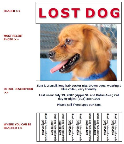 lost pet flyer template free lost found flyer information