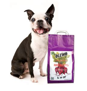 beets for dogs can dogs eat beets olewo