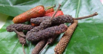 Cabe Jawa Cabe Jamu Bubuk 1kg klasifikasi tanaman cabe jawa klasifikasi tanaman dan hewan