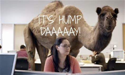 geico camel commercial hump day george s journal october 2013