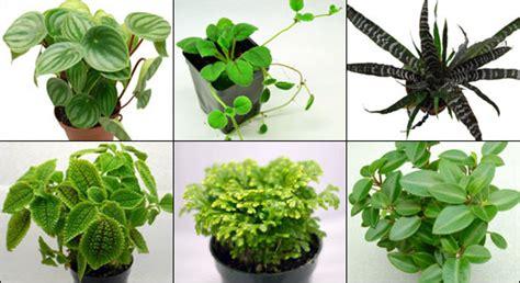 vivarium plant kit  xx terrariums neherp