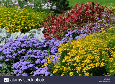 herbaceous perennial garden border mixed plants flowers blooms stock photo royalty free image