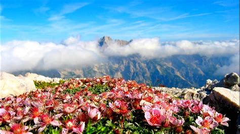 Flower Mountain the mountain flowers los angeles lyrics