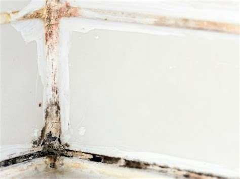 mold bathroom how to remove black mold hgtv