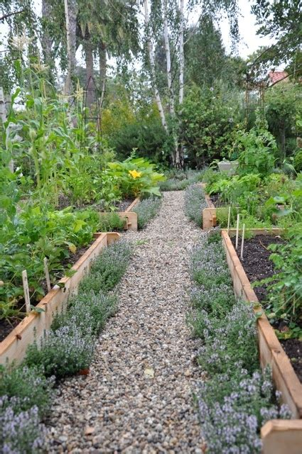 Vegetable Garden 101 Vegetable Gardening 101 Favething