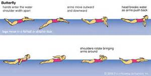 Frog Garden Art - how to swim the butterfly stroke 187 any