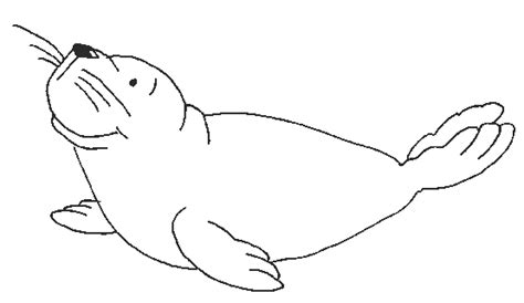 seal coloring pages funny seal coloring page vector seal