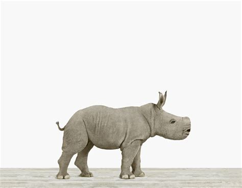 Baby Rhino   The Animal Print Shop by Sharon Montrose