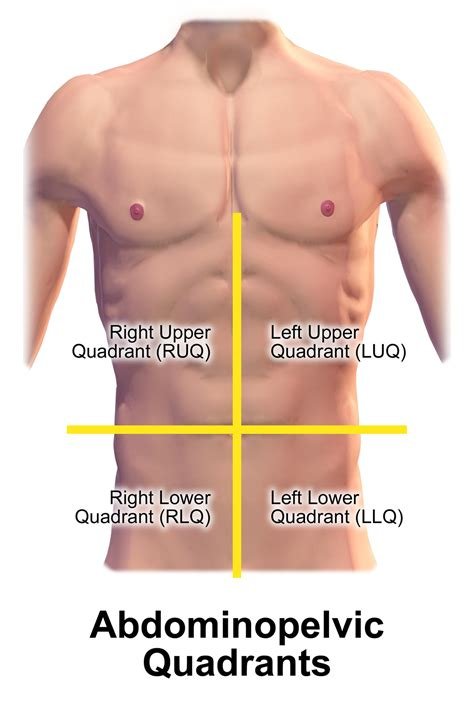 painful lump above c section incision quadrant abdomen wikipedia