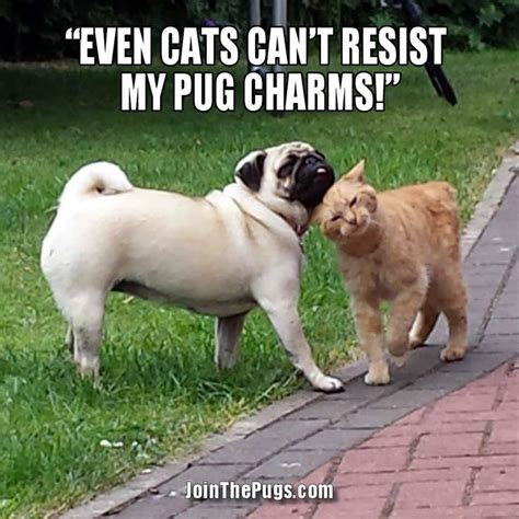 pug names and meanings 17 best ideas about pug names on pugs pug puppies and baby pugs